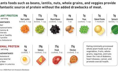 Nutrition – Plant vs Animal Protein